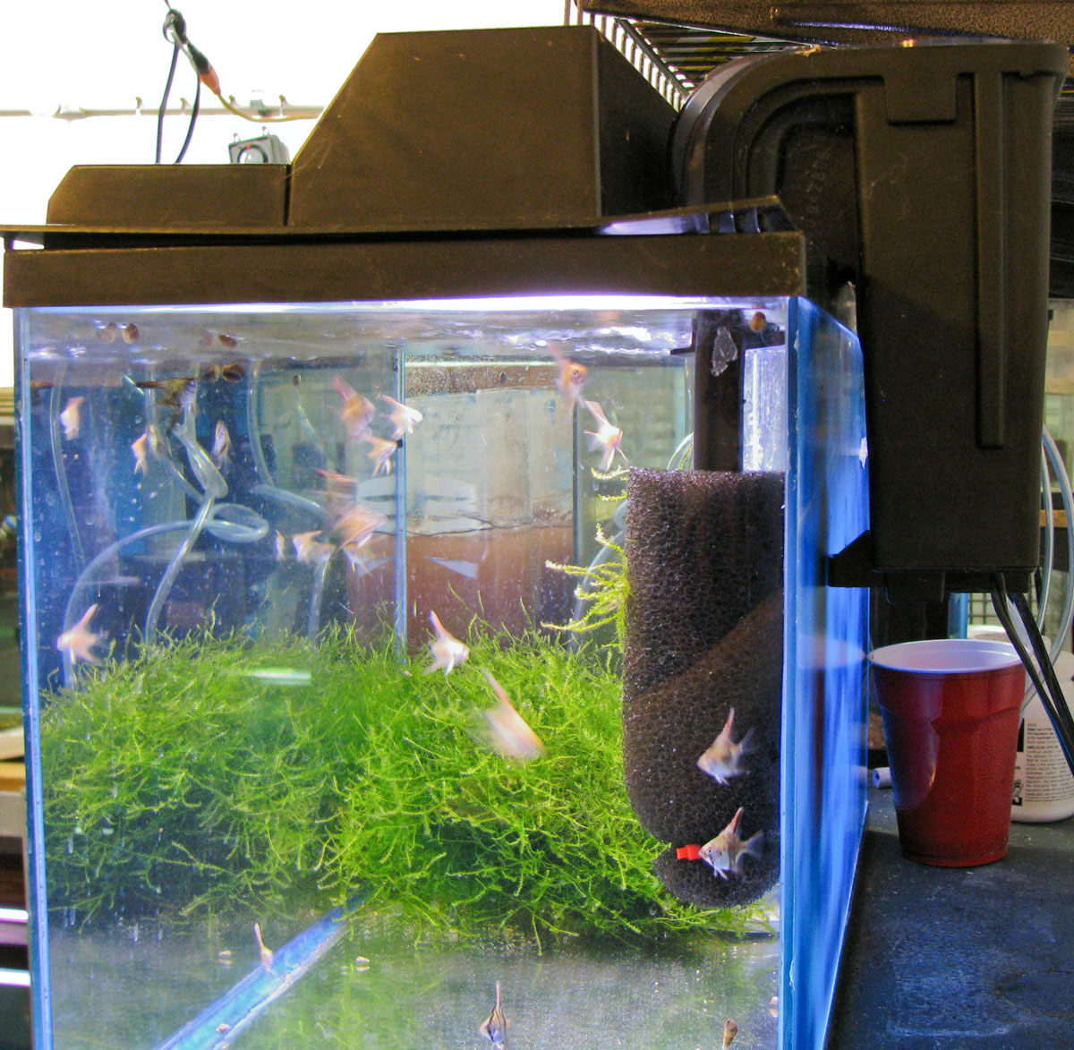 Fish tank filter maintenance setup gold fish tank set up for Fish tank filtration